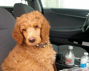 Phinn: travel front seat or don't  travel at all!