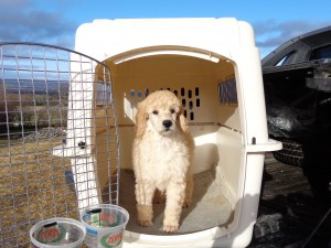 Oops: This kennel is too big for little me!