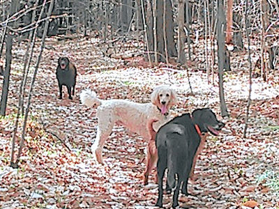 Punch with his pals enjoying the woods