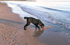 Jake Rescues Stick at Water's Edge