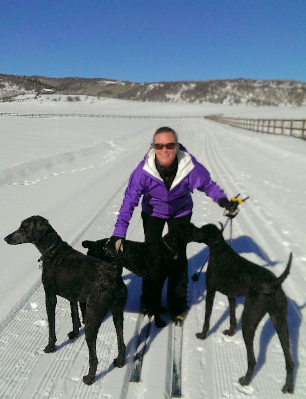 Skiing with 3 poodles