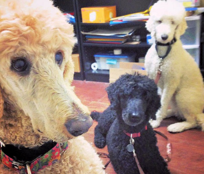 Meeting of St. John's Poodle Union