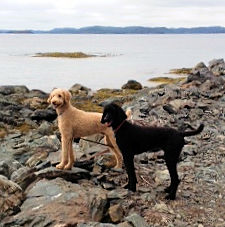 Finn & Lily seaside