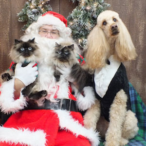 Bailey reluctantly sharing Santa with kitties