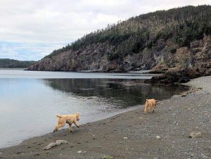 Finn&Lucy explore the shore