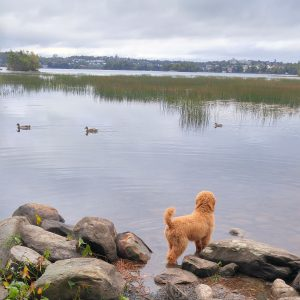 Togo fascinated by ducks
