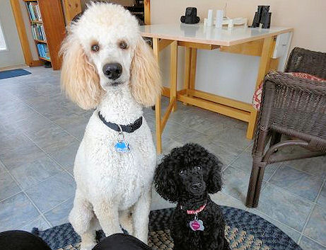 Toby of Cornwall with best friend Maggie