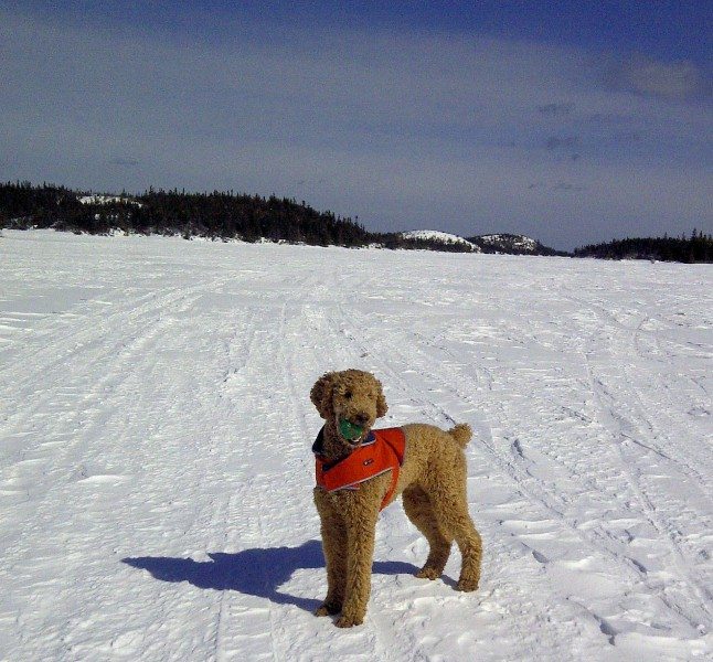 Finn on Winter Lake of Avalon Penninsula