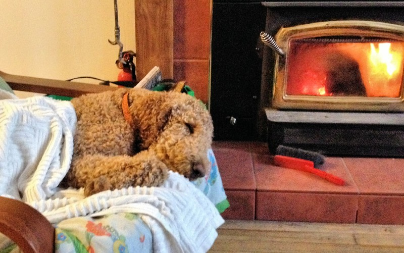 Finn relaxing by the fire