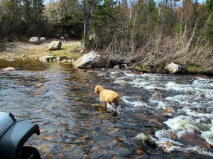 Finn Fording the Stream Along the East Coast Trail