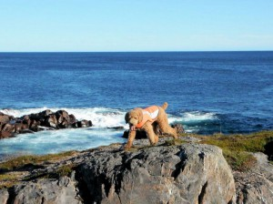Finn Explores the East Coast Trail of Newfoundland