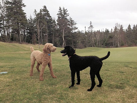 Finn & cousin Lily enjoy a romp before it the snowfall