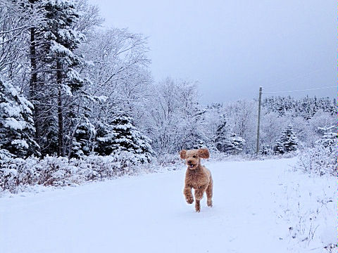 Finn embraces the first snow of winter in Newfoundland.