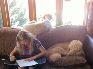 Assisting with homework - poodle style
