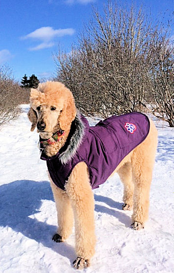 Ella winter purple coat fur collar