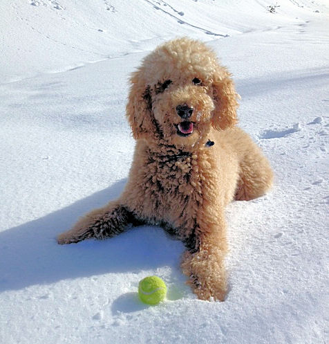 Finn with ball in snow