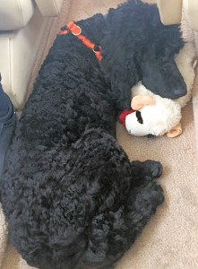 Alistair snoozing with new toy
