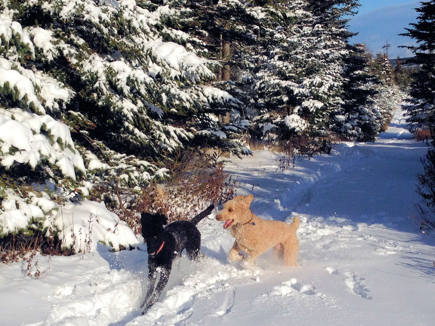 snow fun Finn & Lily 2015